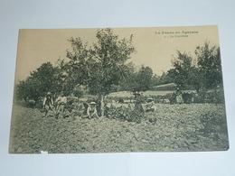 LA PRUNE EN AGENAIS - 2 LA CUEILLETTE - SCENE ET TYPE D'AGEN - 47 LOT ET GARONNE (Z) - Agen