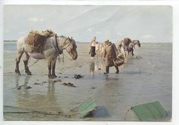 Nos Pêcheurs De Crevettes - Onze Garnalenvissers (cheval Chevaux) - Pêche