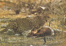 Namibia - Cheetah - 2x Nice Stamps - Namibia