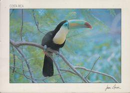Costa Rica - Tucan - Bird - 2x Nice Stamps - Costa Rica