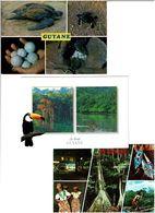 973 / GUYANE /  Lot De 40 Cartes Postales Modernes Neuves - Cartes Postales