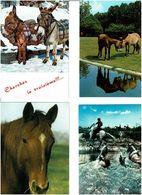 CHEVAUX - ÂNES /  Lot De 70 Cartes Postales Modernes Neuves - Cartes Postales