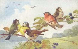 Catharina Klein - Birds - Klein, Catharina