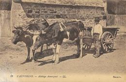 L'Auvergne - Attelage Auvergnat (boeufs) - Carte LL N° 13 - Spannen