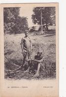 CPA SENEGAL Types Cérères Nu Ethnique Nude Nu Féminin Eros Erotisme - Senegal
