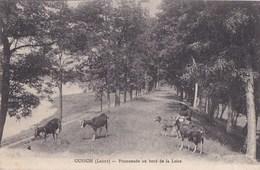 45 OUSSON  GARDIENNE De CHEVRES Et Son CHIEN  Sur Les Bords De Loire 1919 - Non Classés