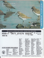 U.A.E. - Birds, Lesser Sand Plovers(reverse 4), Etisalat Prepaid Card Dhs 30, Used - United Arab Emirates