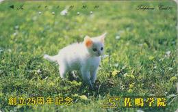 Télécarte Japon / 290-21708 - ANIMAL - CHAT - CAT Japan Phonecard  - KATZE - GATO - GATTO - KAT - 4069 - Gatos