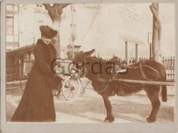 Italy - Mori - Trentino - Bahnhof - 1903 - Photo 120x90mm - Old (before 1900)