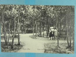 Heyst Sous Bois - Heist