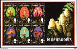 TURKS ET CAIQUES - Pholiota Squarroides - Psilocybe Spumosa - Spathularia Velutipes - Russula Sp. - Clitocybe Clavipes - - Pilze