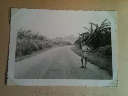 Photo - Cameroun 1953 - Bananeraie De Loum Aux Environs De Penja, Route Loum-Nkonsamba - Africa