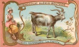 CHROMO GUERIN BOUTRON  IMP.  HEROLD  LA CHEVRE - Guerin Boutron