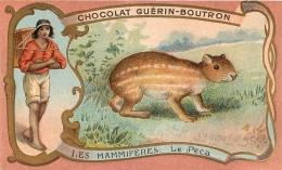 CHROMO GUERIN BOUTRON  IMP.  HEROLD  LE PACA - Guerin Boutron