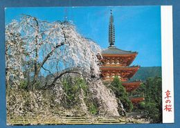 KYOTO CHERRY BLOSSOMS AT DAIGOJI TEMPLE 1982 - Kyoto