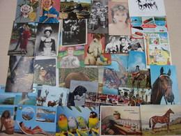 Lot 100 Cp Thèmes Divers, Chevaux, Volcans, Pin-Up, Couple, Moulins, Corrida.......... - Postcards