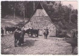 GF (15) 079, L'Auvergne Pittoresque, Erel 23, La Traite Des Vaches Au Buron - Frankrijk