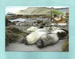 AAT 2010  Mi.Nr. 183 , Southern Elephant Seals - Macquarie Island - Maximum Card - First Day 26 OCT 2010 - Maximum Cards