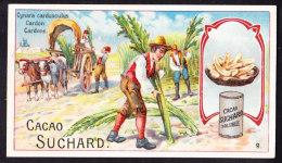 CHROMO Chocolat SUCHARD   Cardone  Vegetables  Serie 191 - Suchard