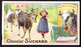 CHROMO Chocolat SUCHARD   Animaux  Hollande  Vache Cattle Cows Serie 161 - Suchard