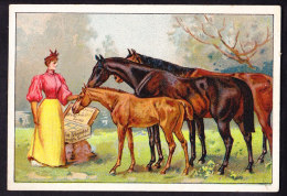 CHROMO Chocolat SUCHARD   +/- 1896  Serie 47  Le Cheval Et Son Utilité    Trade Card  Horses - Suchard