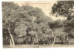 S6931 - Castellon - Grao - Vista De La Pineda - Castellón