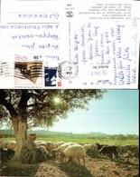 561741,Israel Jerusalem Bethlehem Sheperds Field - Israel