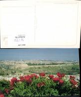 561731,Israel Jerusalem Mohnblumen Klatschmohn - Israel