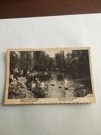 Vigevano Candor D'anatre E Cigni,chiaroscuri E Riflessi Nell'acqua Del Laghetto Pini Abeti Cipressi Viaggiata 1939 - Italia