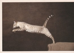 CPM 10x15 . Phot. Yann Arthus-Bertrand . CHAT. CAT. BENGALE (Bengal's Hills Hearty) à Mme & Mr SFEZ-ZON - Cats