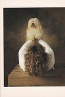 CPM 10x15 . Phot. Yann Arthus-Bertrand . CHIEN. DOG. BICHON HAVANAIS : A Maiden à Mme PERCHET - Dogs