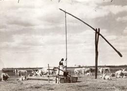 Vie Pastorale En Hongrie Paysan Et Son Troupeau Noria Abreuvoir Ancienne Photo Meurisse 1930's - Professions