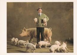 CPM 10x15. Phot. Yann Arthus-Bertrand .COCHON . LARGE WHITE Féloména Et Ses Petits à Mr Ottorino VANNI - Cochons