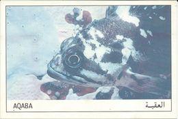 Jordan - Aqaba - Black And Yellow Rockfish - Fishes - Jordanie