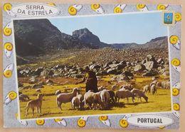 SERRA DA ESTRELA - Portugal - Pastor - Sheperd - Berger - Pastore NV - Métiers