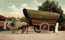 Colombo-bullock Cart -gros Plan- Attelage De Buffle  SRI LANKA . CEYLON CEYLAN - Sri Lanka (Ceilán)