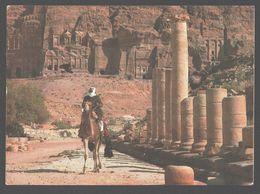 Petra - Paved Street - Camel / Kameel - Jordanie