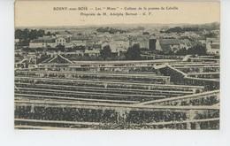 """ROSNY SOUS BOIS - """"Les Murs """" - Culture De La Pomme De Calville - Propriété De M. Adolphe Bertaut - Rosny Sous Bois"""