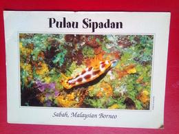 Sabah Underwater - Malaysia