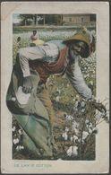 De Lan' O' Cotton, Dixieland, Black Americana, 1909 - Tuck's Postcard - Cultivation