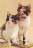 CARTE NEUVE @ CHAT Et Chaton En Famille - Edition ESP Paris N° 15/6 - Katzen