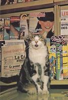 CARTE NEUVE @ CHAT De Presse De Janvier 1979 - Goldorak N°16 - Le Canard Enchainé - Intimité Du Foyer - Chats