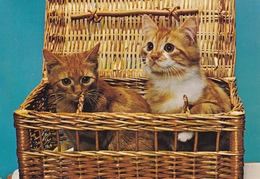 CARTE NEUVE @ CHAT - Chats Dans Panier D'osier - Katzen