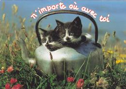 CARTE NEUVE @ CHAT - Couple De Chatons - N'importe Où Avec Toi ! - Katzen