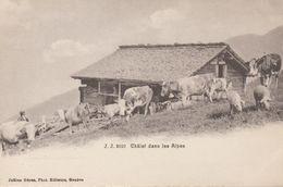 Chalets Dans Les Alpes - Troupeau De Vache, Porcs... Jullien Frères, Editeurs Genève - Switzerland