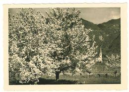 TRENTINO ALTO ADIGE - PRIMAVERA PRESSO BOLZANO - '50  SEMILUCIDA - NUOVA - Bolzano (Bozen)