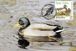 2014 - BIRD - MALLARD (Anas Platyrhynchos) - Maximumkarten (MC)
