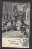 CPA TURQUIE - CONSTANTINOPLE - Pas Dans Libellé - Les Chiens Errants - TB PLAN TB Oblitération IMPRIME AU DOS 1902 - Turquie