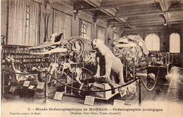 MONACO - Oceanographie Zoologique - Baleine - Ours Blanc - Faune Abyssale      (103758) - Oceanografisch Museum