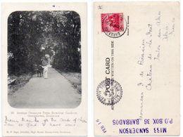 Avenue Oronoque Trees Botanical Gardens - GEORGETOWN, DEMERARA - Cachet Perlé De TOULON SUR ALLIER (103780 - Unclassified